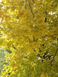automne doré